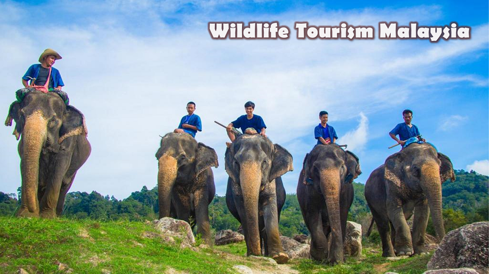 Unknown Reality Of wildlife Tourism : The Dark Truth Behind It