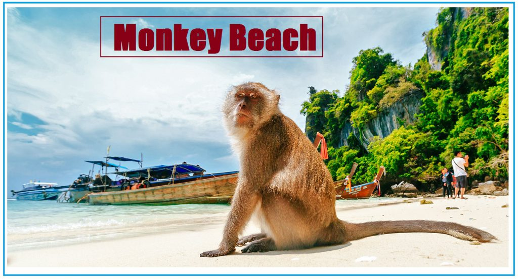 Monkey Beach, Thailand